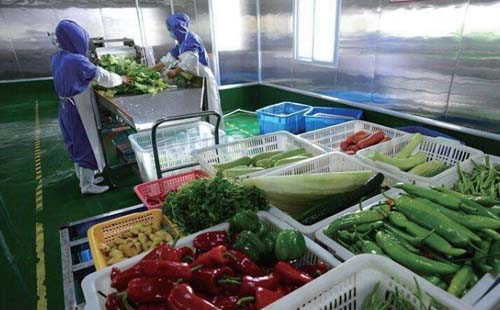 good washing effect of fruit and vegetables