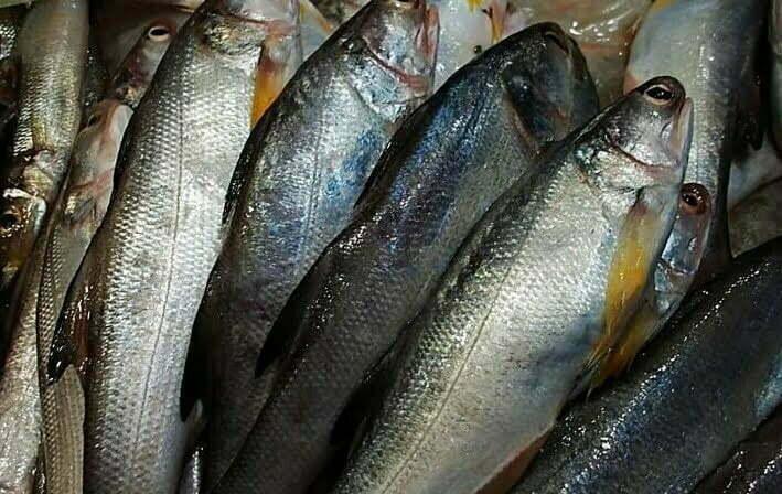 peeled fish