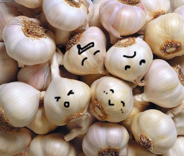 garlic for making fermented garlic