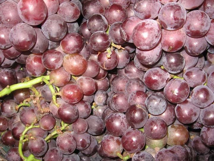 grape for processing