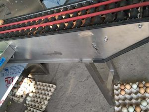 eggs grading process