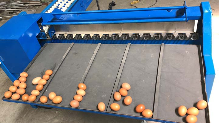 testing site of the egg grading
