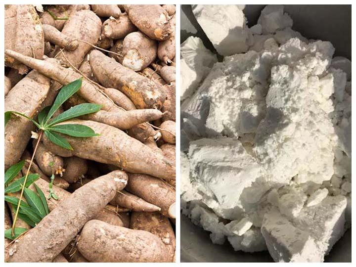 cassava for processing