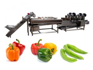 bell pepper washing line for sale