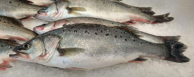descaled fish with the fish scaler machine