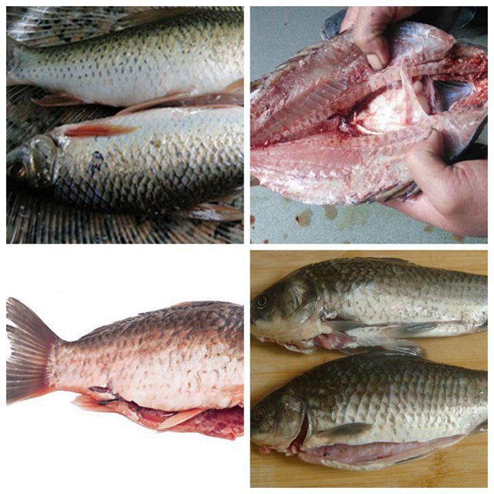fish splitting and gutting