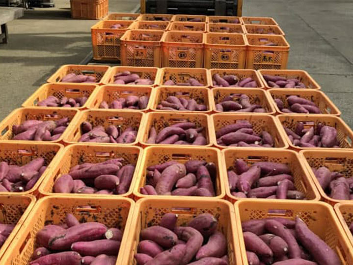 sweet potato processing