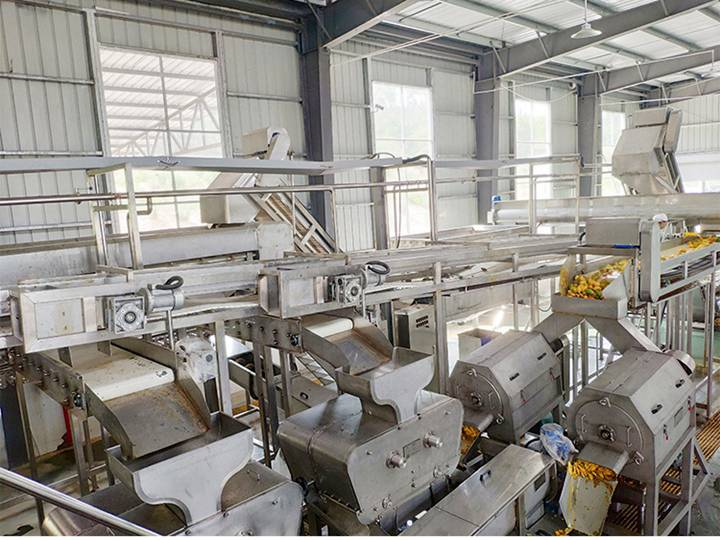 mango pulp production line in Singapore