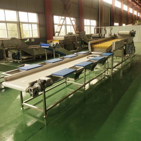 vegetable washing line factory